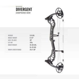 bear-divergent-lh-46336